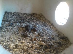 Moniotraggio nido 7