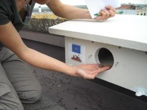 Monitoraggio nidi 6