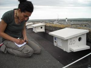 Monitoraggio nido 3
